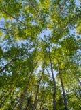 Sunlite Katoenen houten bosje Stock Afbeeldingen