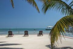 Sunloungers palmträdCaye Caulker Belize Arkivfoto