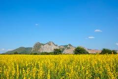 Sunn大麻领域有山和明白蓝天背景 库存图片