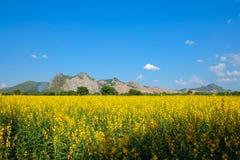 Sunn大麻领域有山和明白蓝天背景 免版税图库摄影