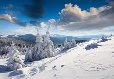 Sunne morning scene inwinter mountain. Royalty Free Stock Image