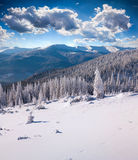 Sunne morning scene in winter mountain. Sunne morning scene in the winter mountain Royalty Free Stock Photos
