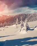 Sunne morning scene in the winter mountain. Instagram toning Stock Photo