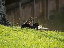 Sunning Snake Bird Stock Photography