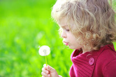 Sunny. Cute child with dandelion in summer field stock images