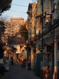 sunny Fotografie Stock