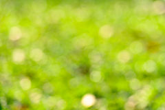 Sunny abstract green nature background Royalty Free Stock Photos