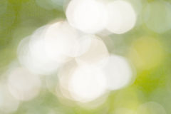 Sunny abstract green nature background Stock Photo
