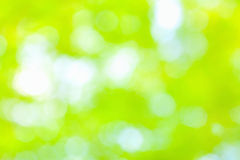 Sunny abstract green nature background, selective focus.  Royalty Free Stock Photos