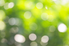 Sunny abstract green nature background, selective focus Royalty Free Stock Photos