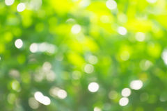 Sunny abstract green nature background, selective focus Stock Image