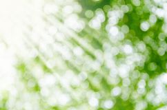 Sunny abstract green nature background. Royalty Free Stock Photography