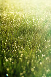 Sunny abstract green nature background. Selective focus Stock Images