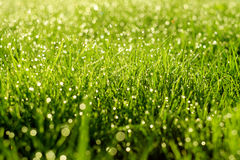 Sunny abstract green nature background. Selective focus Royalty Free Stock Image