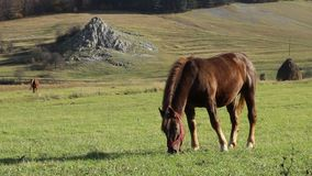 Sunny Afternoon Grazing Horse stock video footage