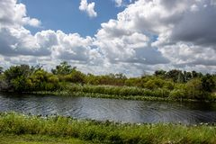 The Florida Everglades stock images