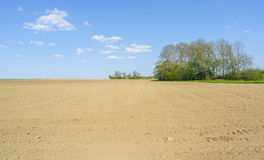 Sunny agricultural scenery Stock Photography