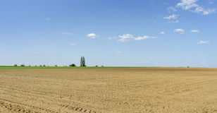 Sunny agricultural scenery Royalty Free Stock Photography
