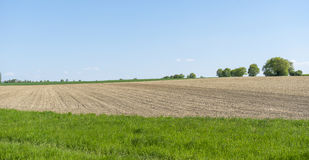 Sunny agricultural scenery Royalty Free Stock Photo