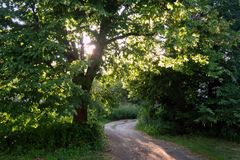 Sunny alley in summer in the city or village at morning or at evening. royalty free stock photo