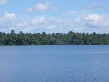 Free Sunny Amazon Forest View Royalty Free Stock Images - 139200489