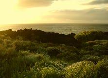 Sunny Atlantic shore