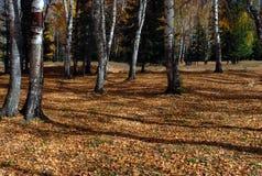 Sunny autumn Royalty Free Stock Photos
