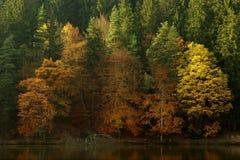 Sunny autumn Stock Photo