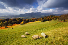 Sunny autumn alpine view with flock of sheeps. Sunny autumn alpine panorama with beautiful view and with a flock of sheeps on grass in the foreground Stock Images