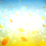 Sunny autumn background vector illustration Royalty Free Stock Photography