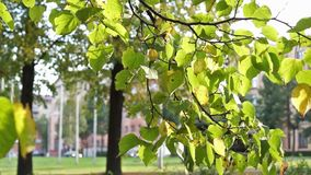 Sunny autumn city street stock footage