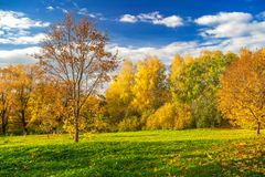 Sunny autumn in countryside. Bright autumn landscape with golden trees and blue sky in countryside Royalty Free Stock Images