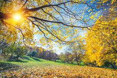 Sunny autumn in countryside Royalty Free Stock Image
