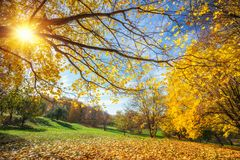 Sunny autumn in countryside. Sunny autumn landscape with golden trees and blue sky in countryside Royalty Free Stock Photography