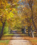 Sunny autumn day Royalty Free Stock Image