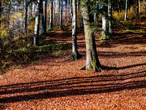Sunny autumn day in the forest Stock Photography