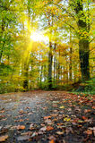 Sunny autumn day Stock Photography
