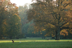A sunny autumn day in the park. The dogs are playing and the people are relaxing stock photos