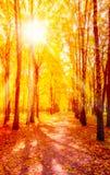 Sunny autumn day park Royalty Free Stock Image