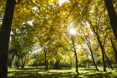 Sunny autumn day in the park royalty free stock images