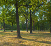 Sunny autumn day among the trees. In the park stock photography
