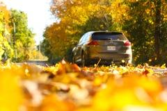 Sunny Autumn Drive Down ein Blatt bedeckte Landstraße stockbilder