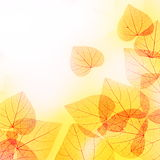 Sunny Autumn Floral Border of Leaves Royalty Free Stock Photos