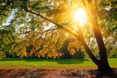 Sunny autumn foliage. Colorful foliage in the autumn park Royalty Free Stock Photo