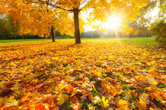 Sunny autumn foliage Royalty Free Stock Images