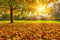 Sunny autumn foliage Royalty Free Stock Image