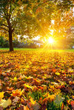Sunny autumn foliage Royalty Free Stock Photography