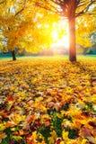 Sunny autumn foliage Stock Photo