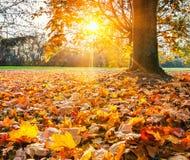 Sunny autumn foliage Stock Images