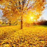 Sunny autumn foliage Stock Images